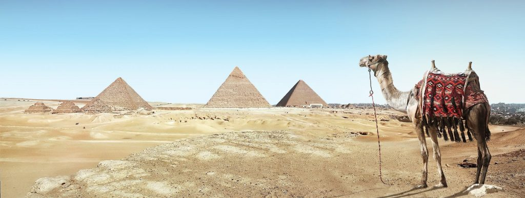 A panorama of the pyramids of Giza in Egypt with a camel in the foreground.